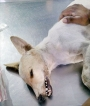 Dogs die of poisoning  in Puwakwatte