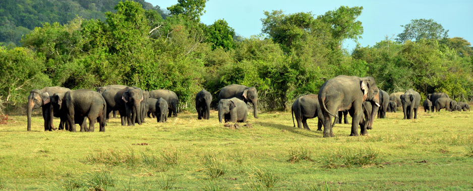 Elephantine appeal to  save the star of our wildlife