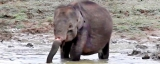 Let's save our wild elephants