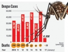 Dengue mainly reported from densely populated areas of Colombo
