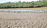 Sri Lanka needs $1.5 bln to  tackle impending drought crisis