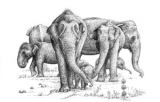 Shantha's gentle giants: It's something to trumpet about
