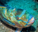 Alarm bells ring for popular reef fish