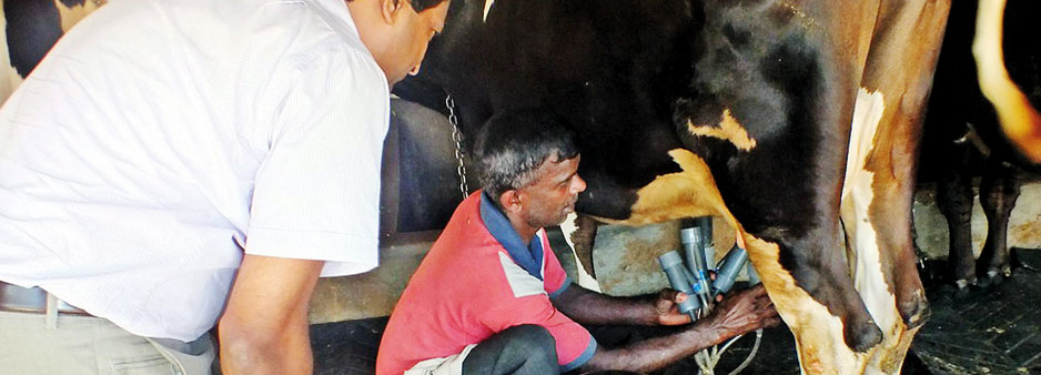 Public, private sector leaders emphasise need  for collaboration to improve dairy industry