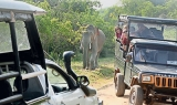 Rules flouted at Yala  National Park
