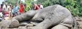Deadly garbage dumps  pose elephantine problems