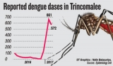 Deadly dengue  epidemic brings Kinniya to its knees