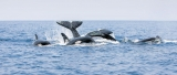 Super pods of sperm whales put on marine spectacle