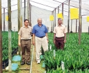 Sri Kumar consulted to steer oil palm industry in Sri Lanka