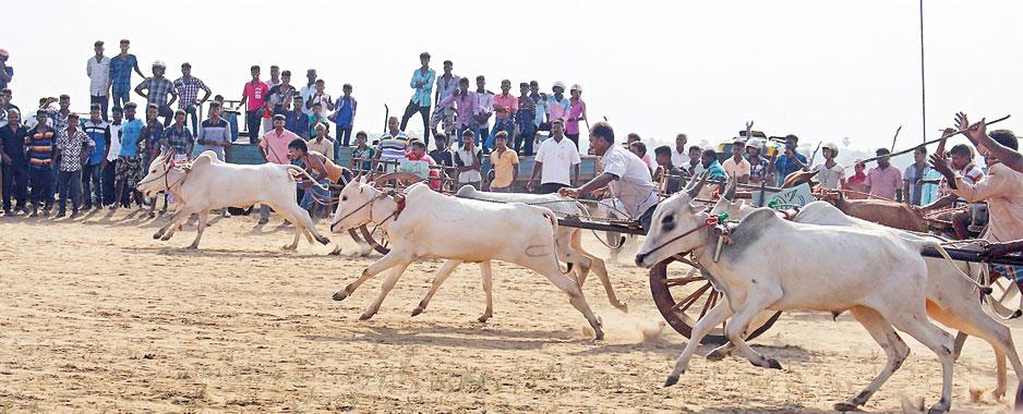 Thirikkal racing still raises hackles