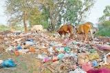Litterbugs turning Kataragama into a garbage dump