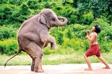 Cinema on elephants and children