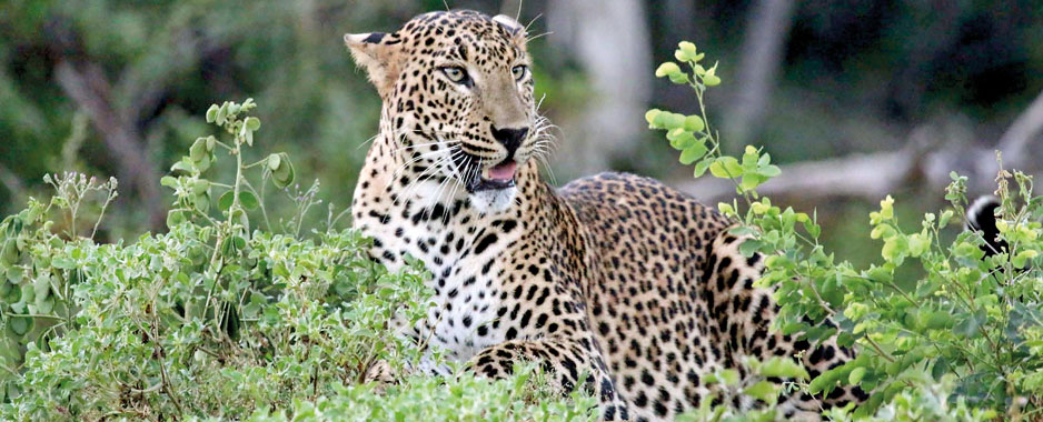 Yala National Park a mess due to political meddling