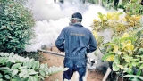 Dengue cases and deaths: Numbers up to now exceed all of last year's