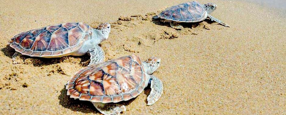 Protect unique Sinharaja with a strict eco-tourism plan