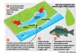 Nandikadal lagoon fish perished without oxygen, says NARA