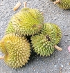 If you can bear the smell, Durian is a must try
