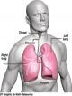 Lung health gets a powerful breath