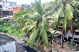 Runaway illegal constructions' sheer enormity defies demolition