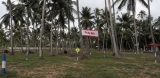 Sri Lanka's coconut growers dismayed  by plans to import fresh coconut