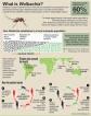 Bug vs bug
