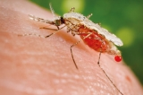 Urgent need to control spread of invader-malarial vector from South India