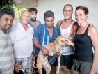 A honeymooning couple's hearts go out to injured stray