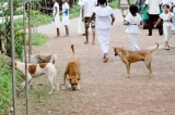 Infected dog  trips up rabies-free campaign