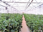 CIC Group ventures into greenhouse farming