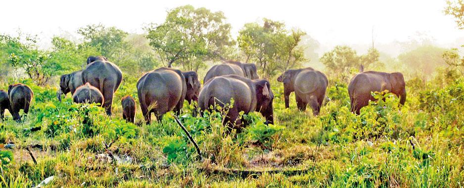 Jumbo boost for tourism