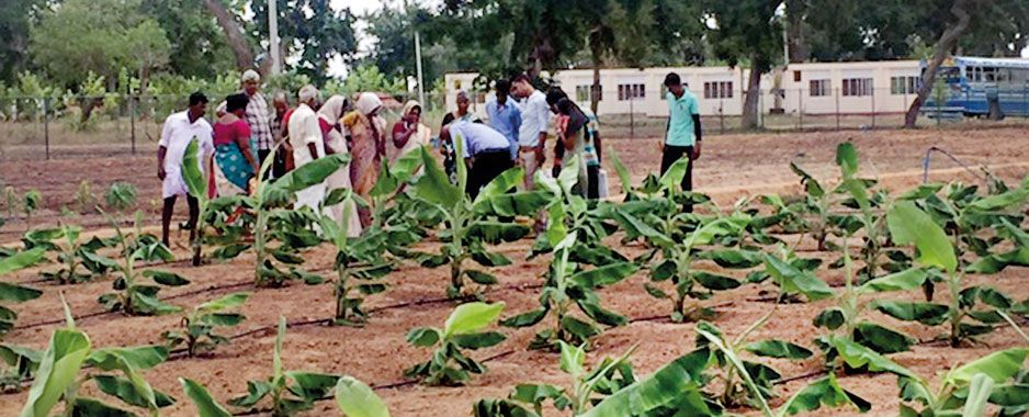 Drip irrigation could trickle down relief to parched dry zone