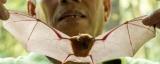 Hooked on bats