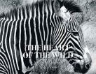 Launch of The Heart of the Wild