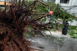 Windy Wednesday: 13 killed, 100,000 affected