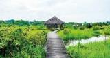Head to Diyasaru Park, Thalawathugoda for two days with the birds