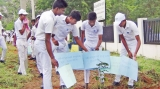 5,000 trees planted as UN celebrates Volunteers Day