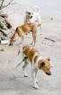 Dog lovers snarl at farm animal agency's sterilisation role