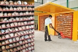 SL coconut growers  oppose coconut imports