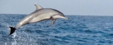 Youth take to dolphin watching