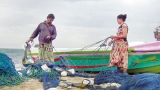 Unscheduled, offtrack coal carriers rip nets, claim fishermen