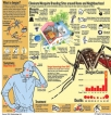 Time is of essence in dealing with  dengue:Expert
