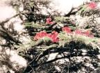 Caroline's Lankan blooms inspired by Chinese paintings