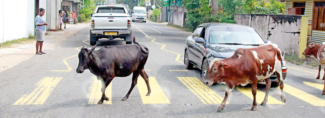 Law of the jungle on city roads – Photo focus