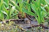 Vanishing wetlands