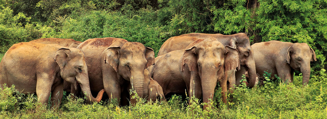 Elephant Conservation Project New plans for this year