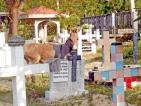 'Puttalam Booruwa' on verge of extinction