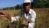 Farmers versus  millers: Rice price fight brewing again
