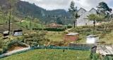 Pedro Tea Estate manager lodges police complaint against squatters