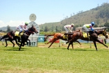 Thoroughbreds in action on March 17