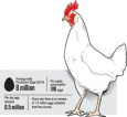Producers claim Ministry bad eggs soiling domestic industry